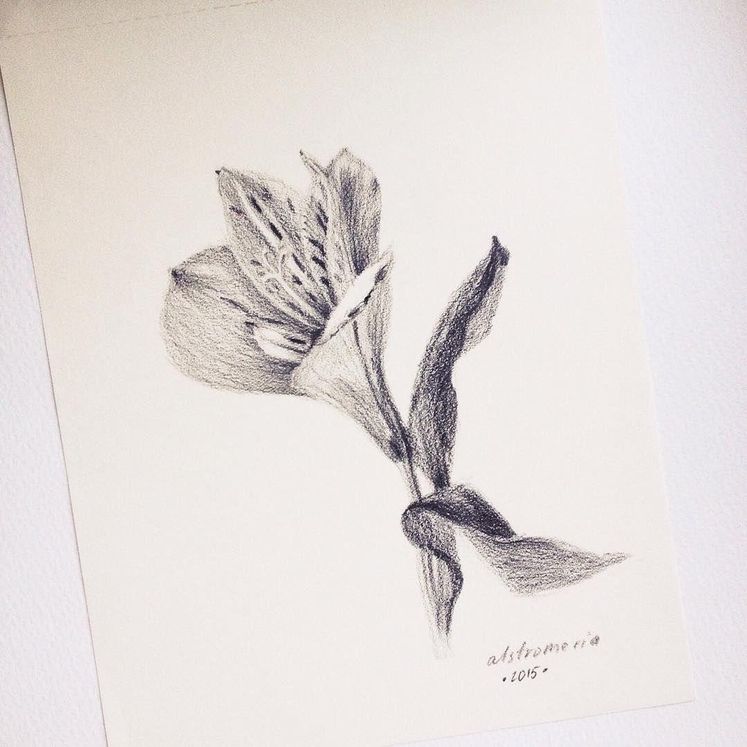 In Bloom 1 Alstroemeria Drawing Graphite Pencil Sketch Flower Lilies Drawing Sketches Drawing Sketches