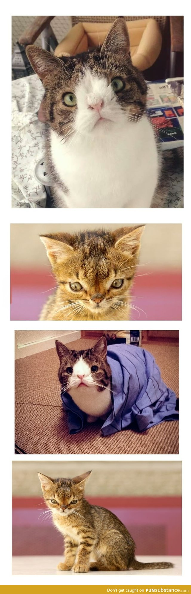 Down syndrome cats Just kitties Down syndrome cat
