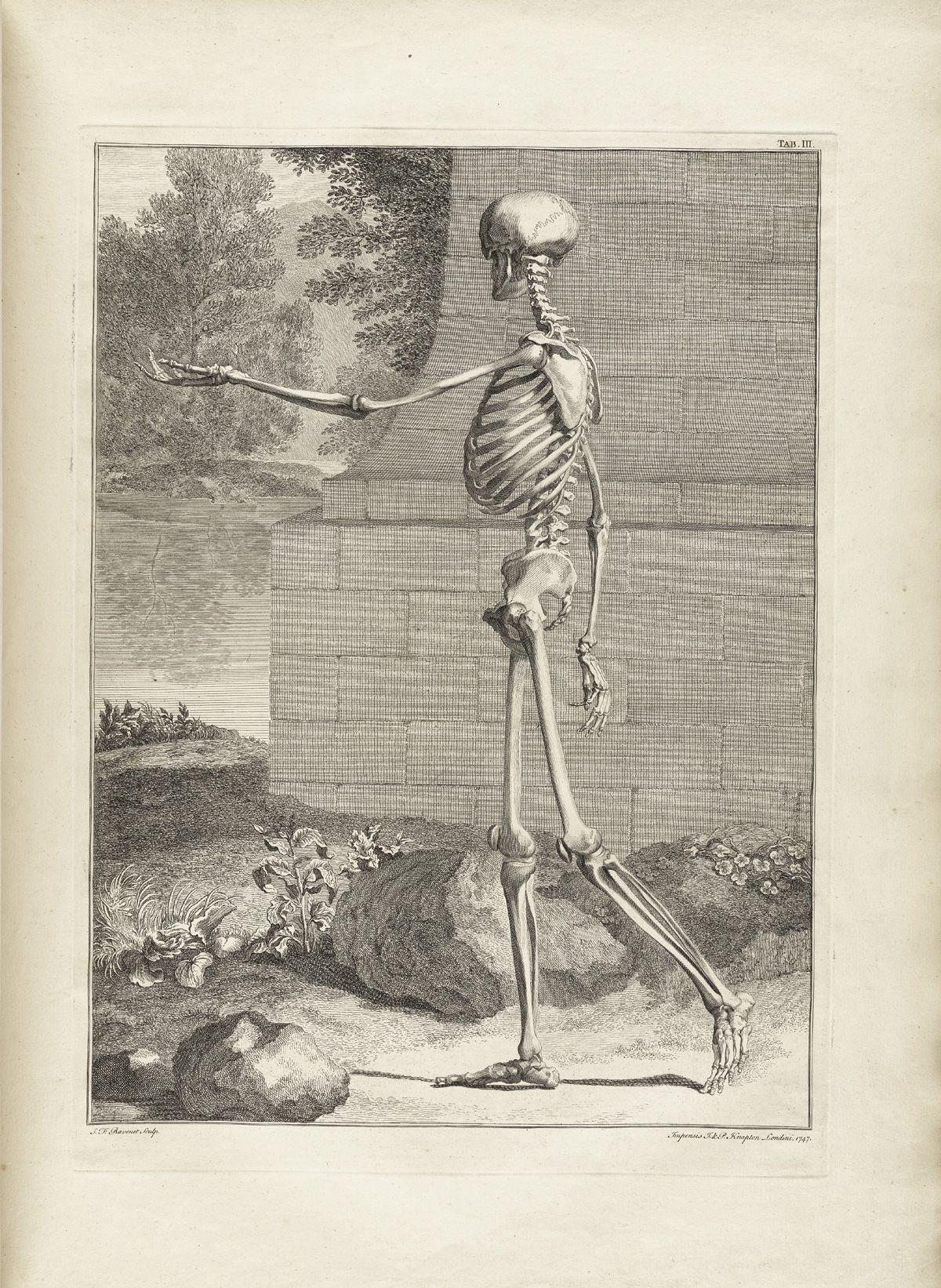 Bernhard Siegfried Albinus | Cuerpo Humano | Pinterest | Anatomía ...