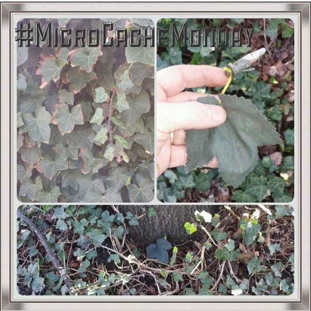 cost charm exquisite design wholesale dealer A tricky little geocache under a leaf. Very tricky hide ...