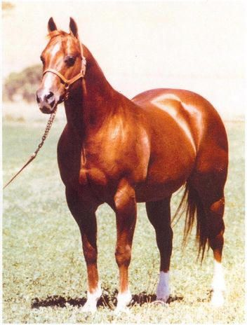Doc Bar....sure don't make em like they used to. What a legend. Our horses lineage! so cool seeing him here!