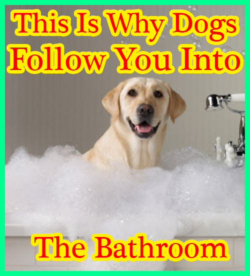 This Is Why Dogs Follow You Into The Bathroom I Never Knew This