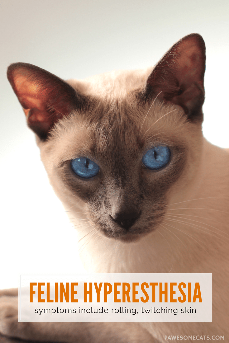 Understanding Hyperesthesia In Cats Pawesome Cats Cat Care Kitten Health Cat Health