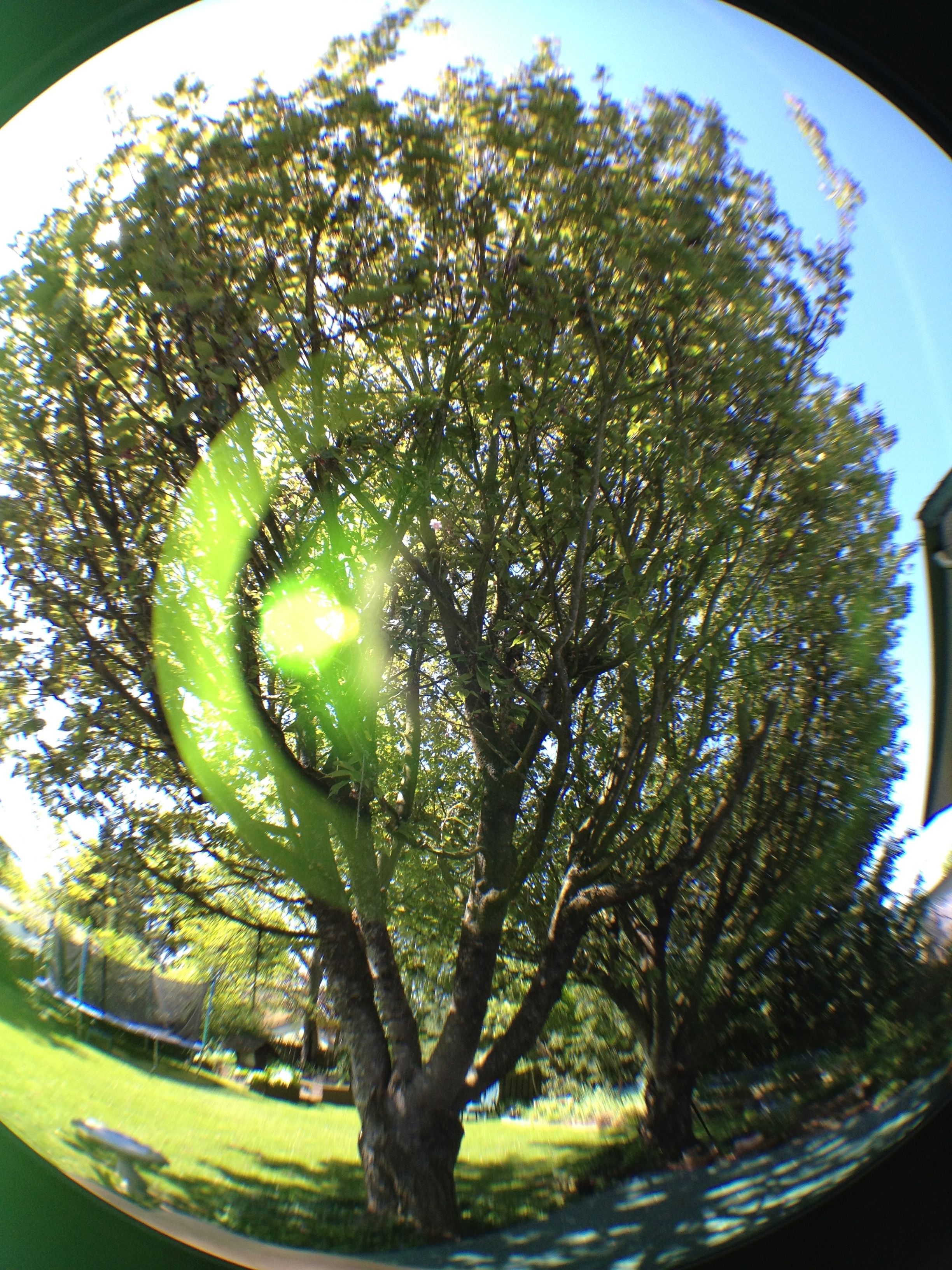 Fun photography with the fisheye on olloclip