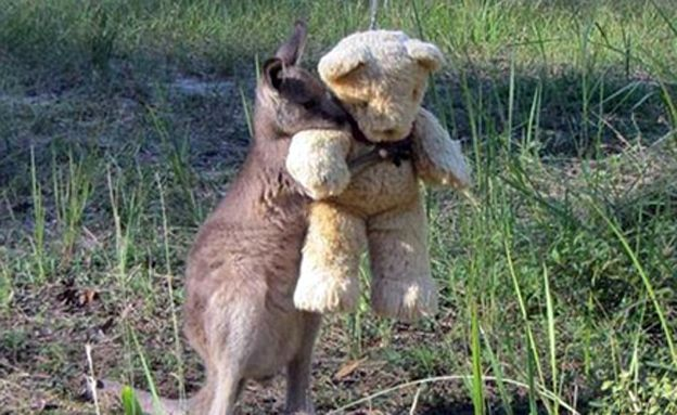 Slam Pc Sweet Kangaroo With A Teddy Bear كنغر يتيم يحتضن لعبة دبدوب Cute Animals Animals Friends Cute Baby Animals