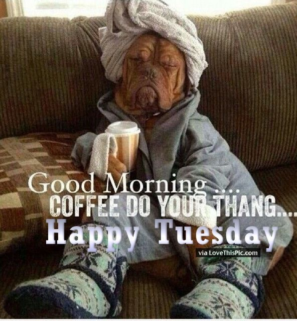 Funny Tuesday Good Morning Quote Animals Greetings Funny Good