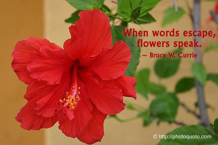 Pin By S Baxter On Inspiration Flower Quotes Hibiscus Love Appreciation Quotes