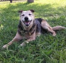 The Joys Of Adopting A Senior Dog Senior Dog Dogs Adoption
