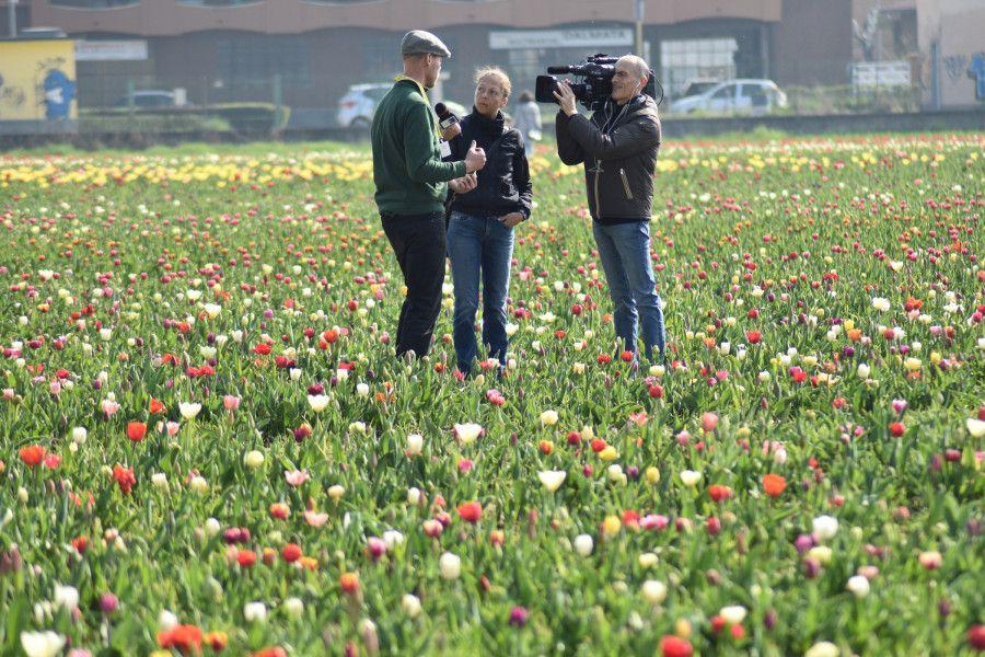 Keď Miláno rozkvitne Tulipani