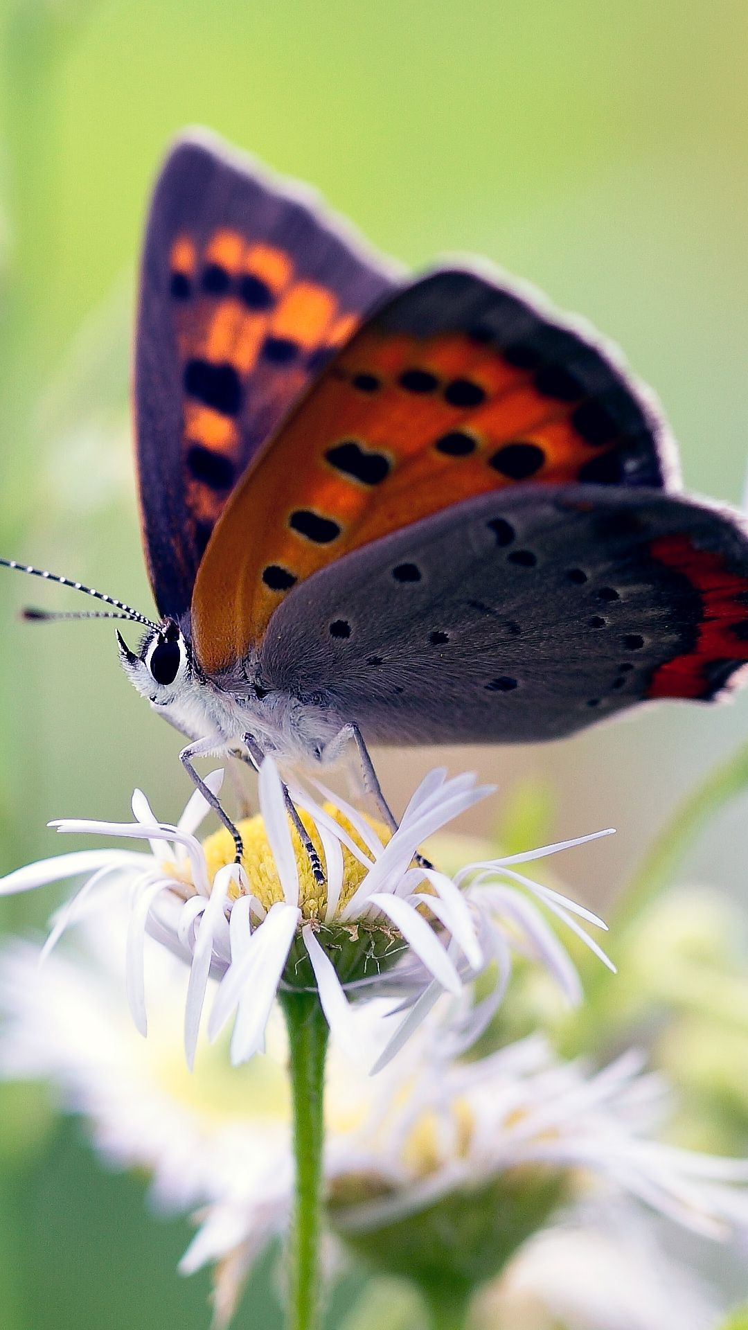 Amazing Butterfly On Flower Free Nature Hd Wallpaper Desktop Background Images Butterfly Wallpaper Butterfly Images