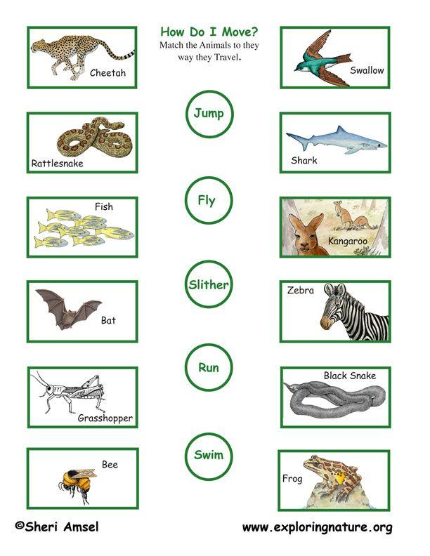 Animal Motion Locomotion Matching Fun Worksheets For Kids Animal Movement Animal Worksheets Animals worksheets word pic matching