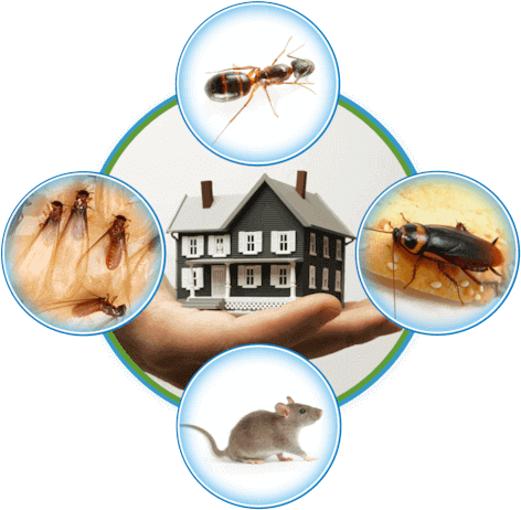 Know The Harmful Insects From You Must Be Make A Distance Bedbug Rodent Wildlife Carpenterant Ant Wasp Surrey Vancouver Pest Pest Control Termite Treatment Termite Control
