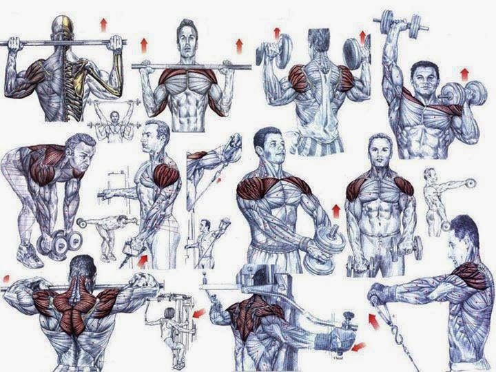 This A Simple Exercises For The Beginings Bodybuilding CHEST PROGRAM SHOULDERS BACK P