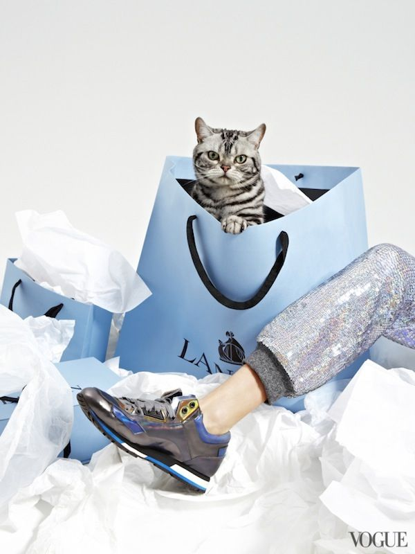 Vogue's Latest Shoot Pairs Adorable Kittens With Fashionable Shoes  #fashion #cat #cute
