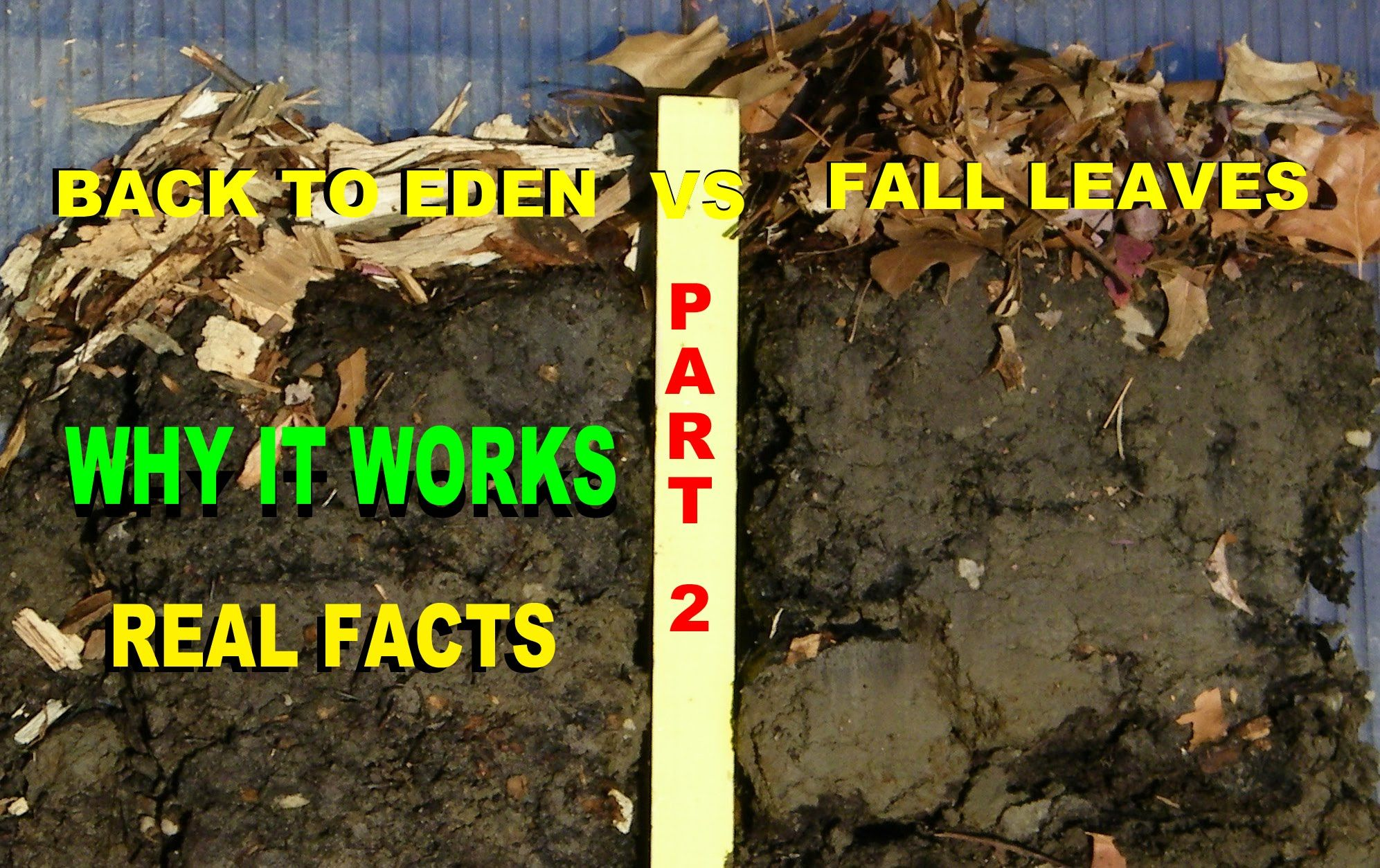 Back To Eden Organic Gardening Method With Wood Chips VS Leaves Composti.
