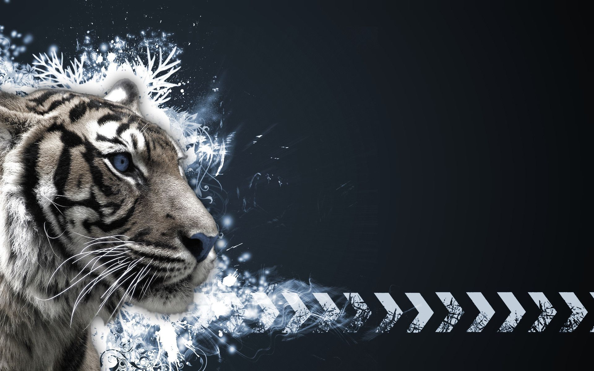 white tiger high quality hd wallpapers high resolution p 1920 1200