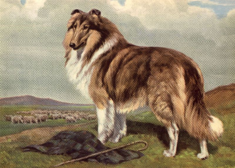 collie painting Collie Vintage Dog art prints, Gifts and