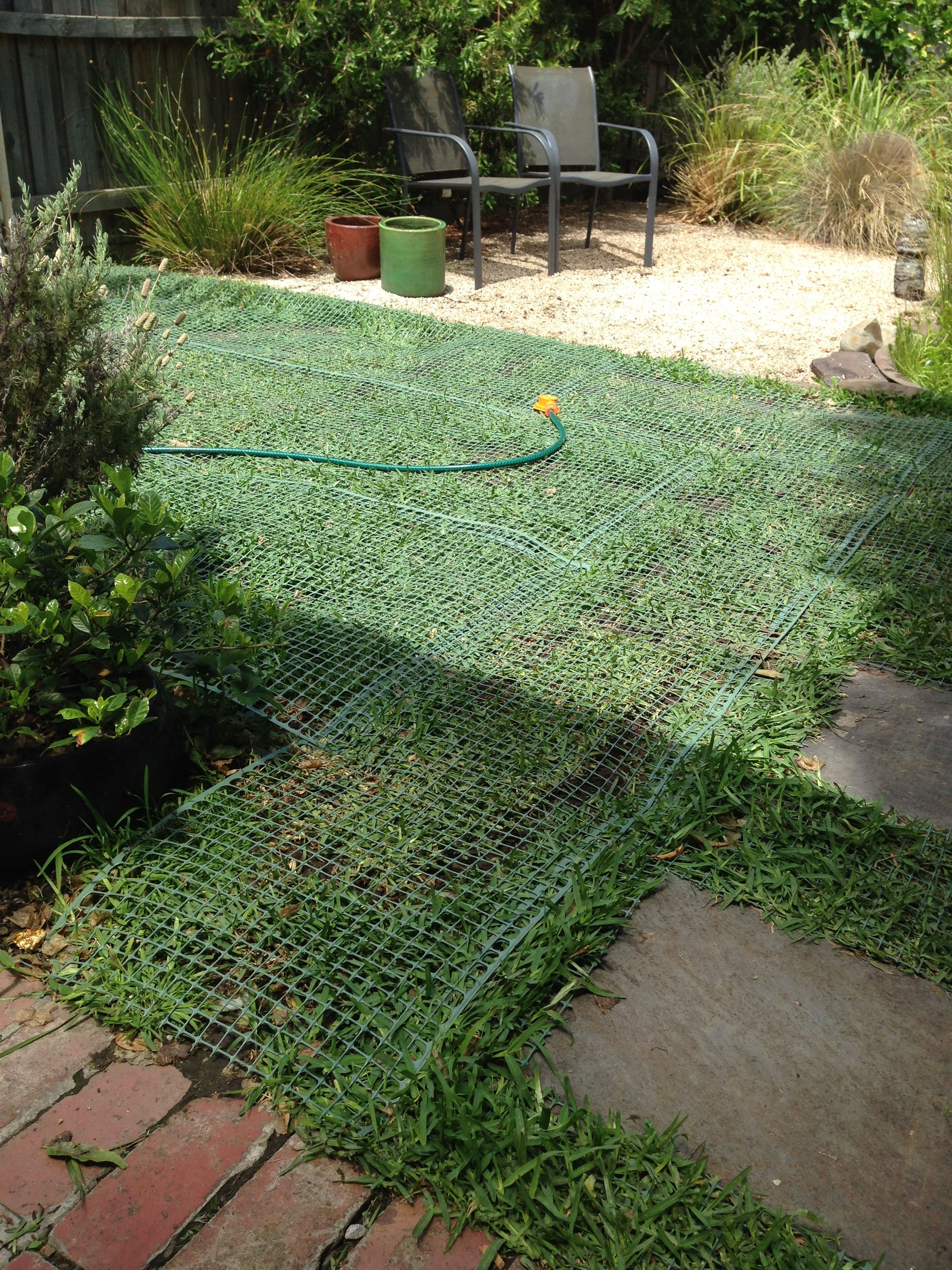 Dog proofing that precious grass! Back gardens