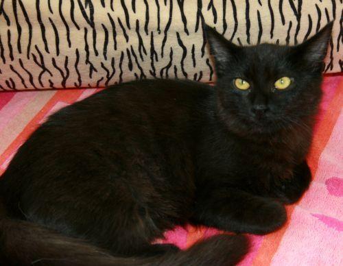 Adopt Magic on Pet adoption, Adoption, Cats