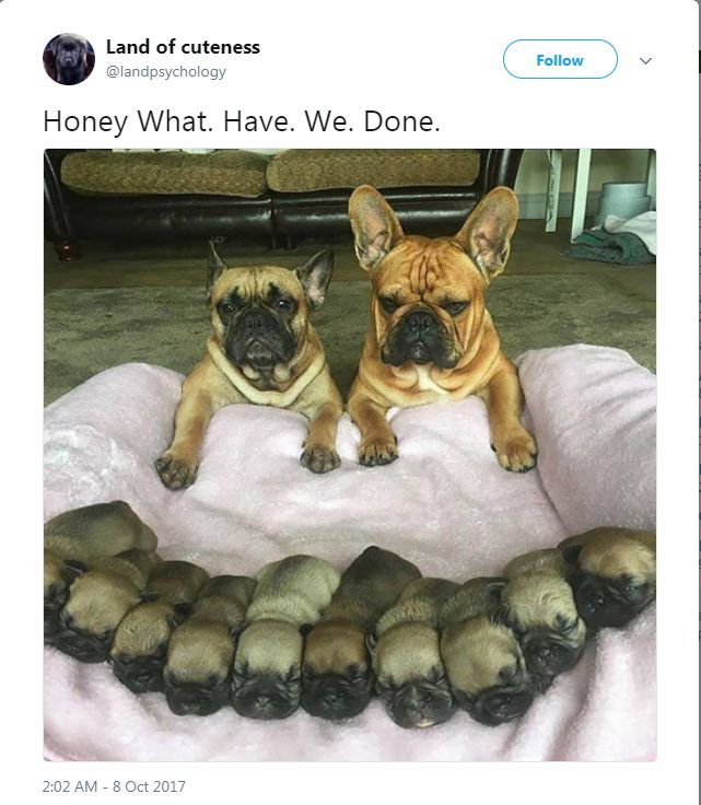 Animal Tweets 23 Funny Pics Mothers Day Funny Dog Memes