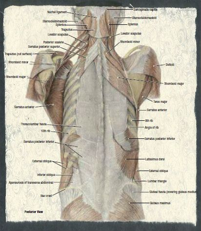 The language of anatomy and meeting your cadaver -- from ...