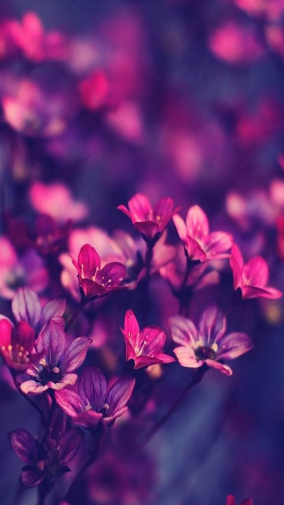Incredible Photos Cool Ios Wallpapers App Kikomo For Ur Iphone Ipod Devices Get It Rat Purple Flowers Wallpaper Purple Wildflowers Flower Backgrounds Beautiful attractive beautiful iphone