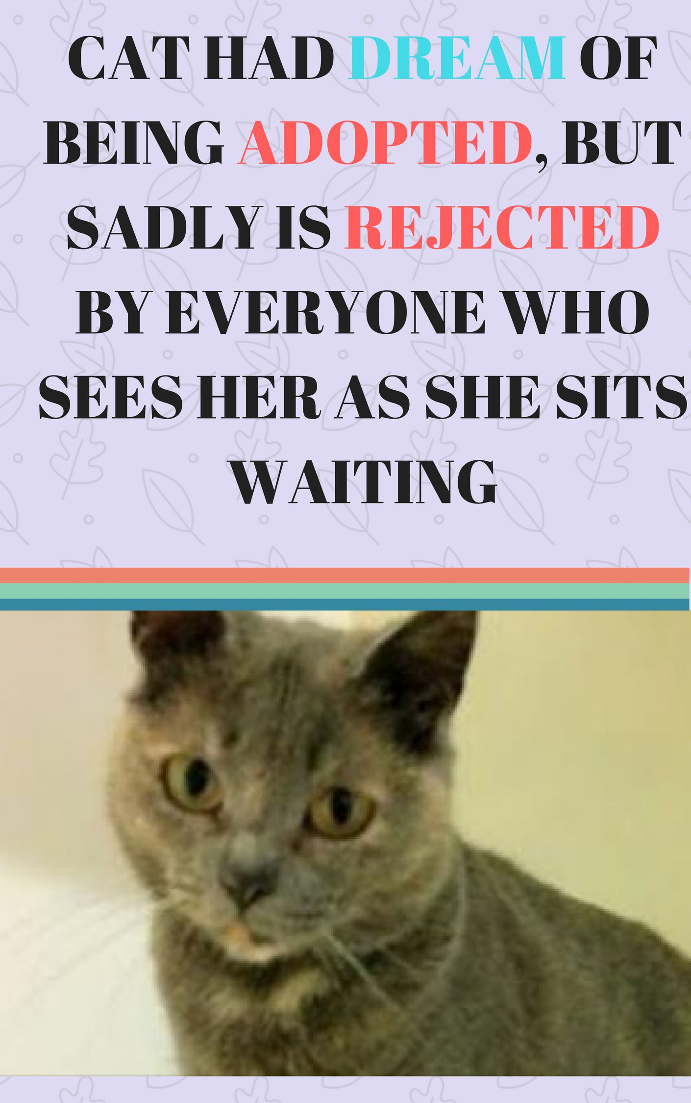 Cat Had Dream Of Being Adopted But Sadly Is Rejected By Everyone Who Sees Her As She Sits Waiting Animal Rescue Stories Cats And Kittens Cute Cats