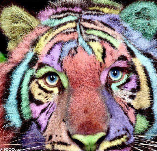 rainbow Pet tiger, Fierce animals, Animals beautiful