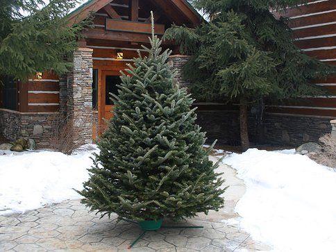 Five Star Christmas Tree Co. Deal - Portland - Eastside ...