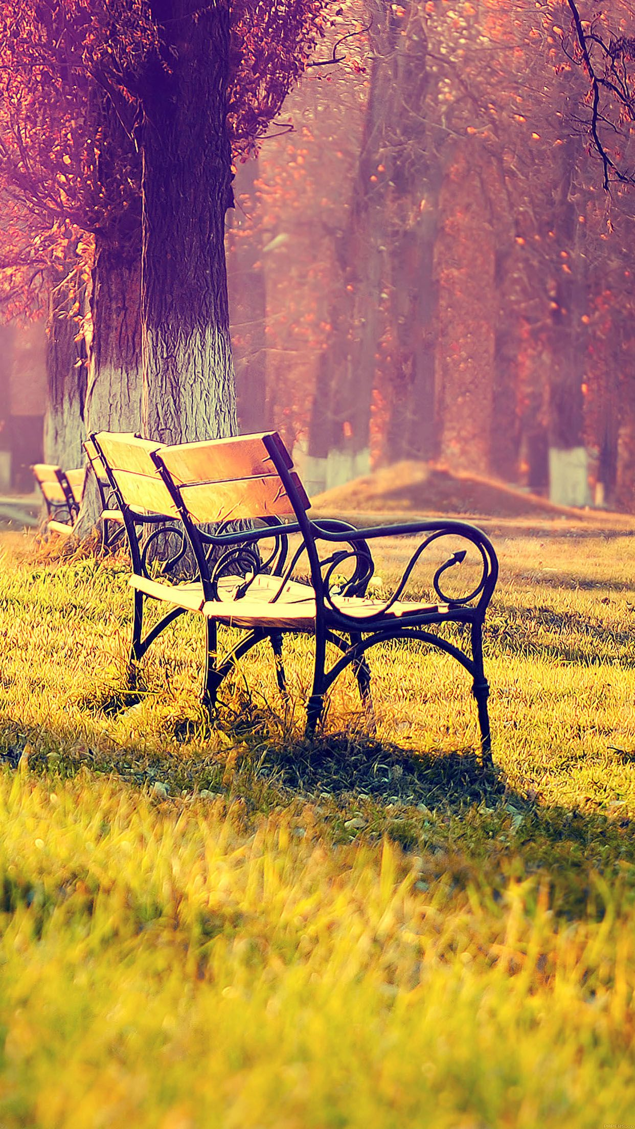 nice wallpaper fall park chair lonely nature iphone6 plus wallpaper