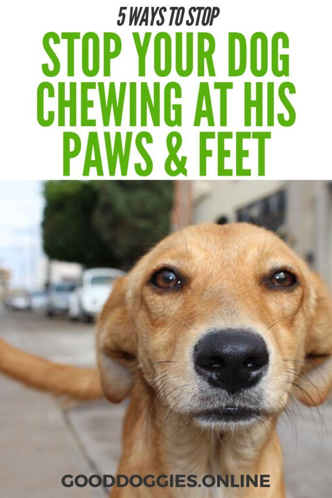 5 Ways How To Stop A Dog From Chewing Paws Dog Stuff Dog