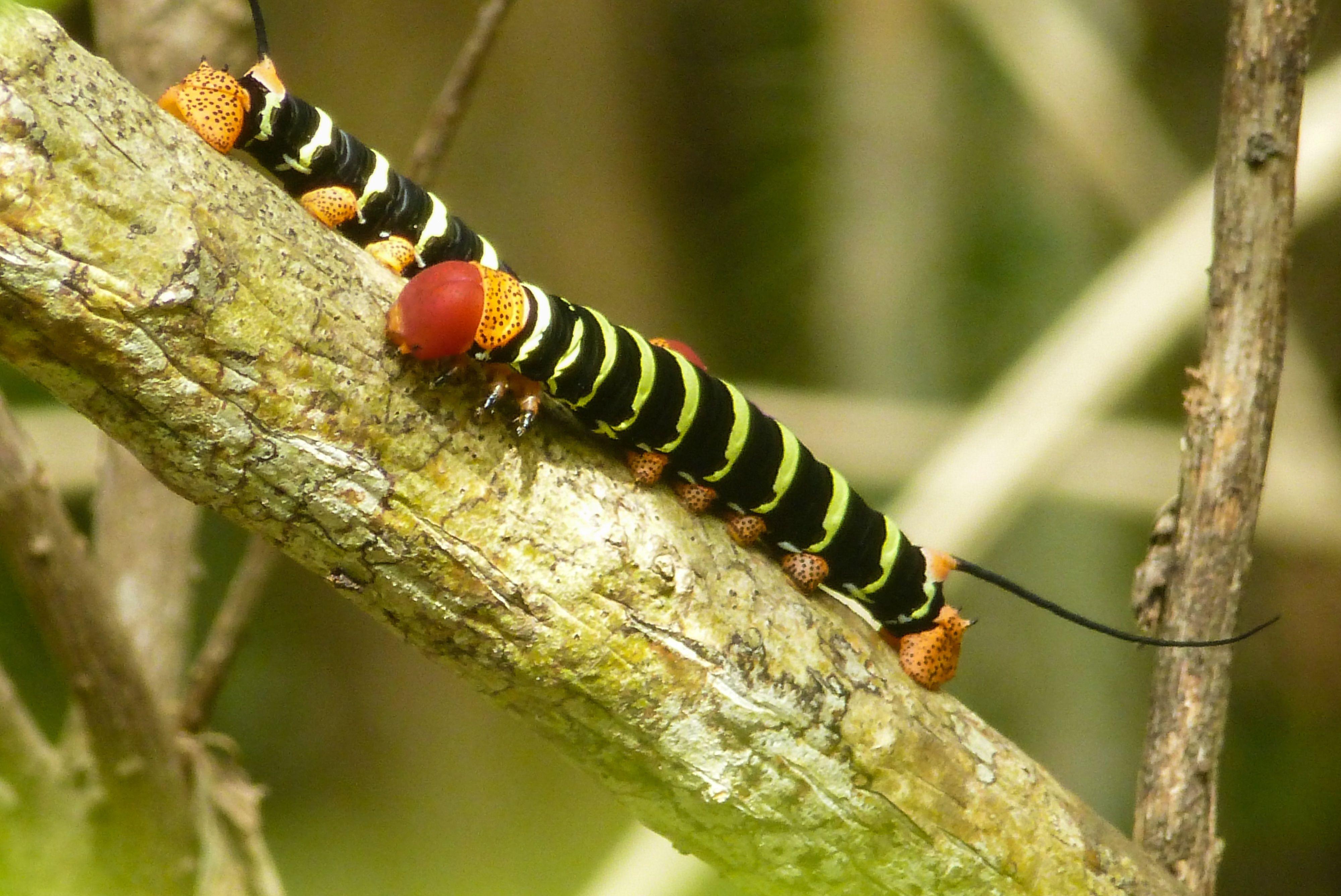 Înregistrarea insectelor. Nu lasati insectele sa va afecteze timpul petrecut in aer liber