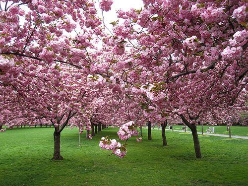 Heavenly Brooklyn Botanical Garden Botanical Gardens Garden