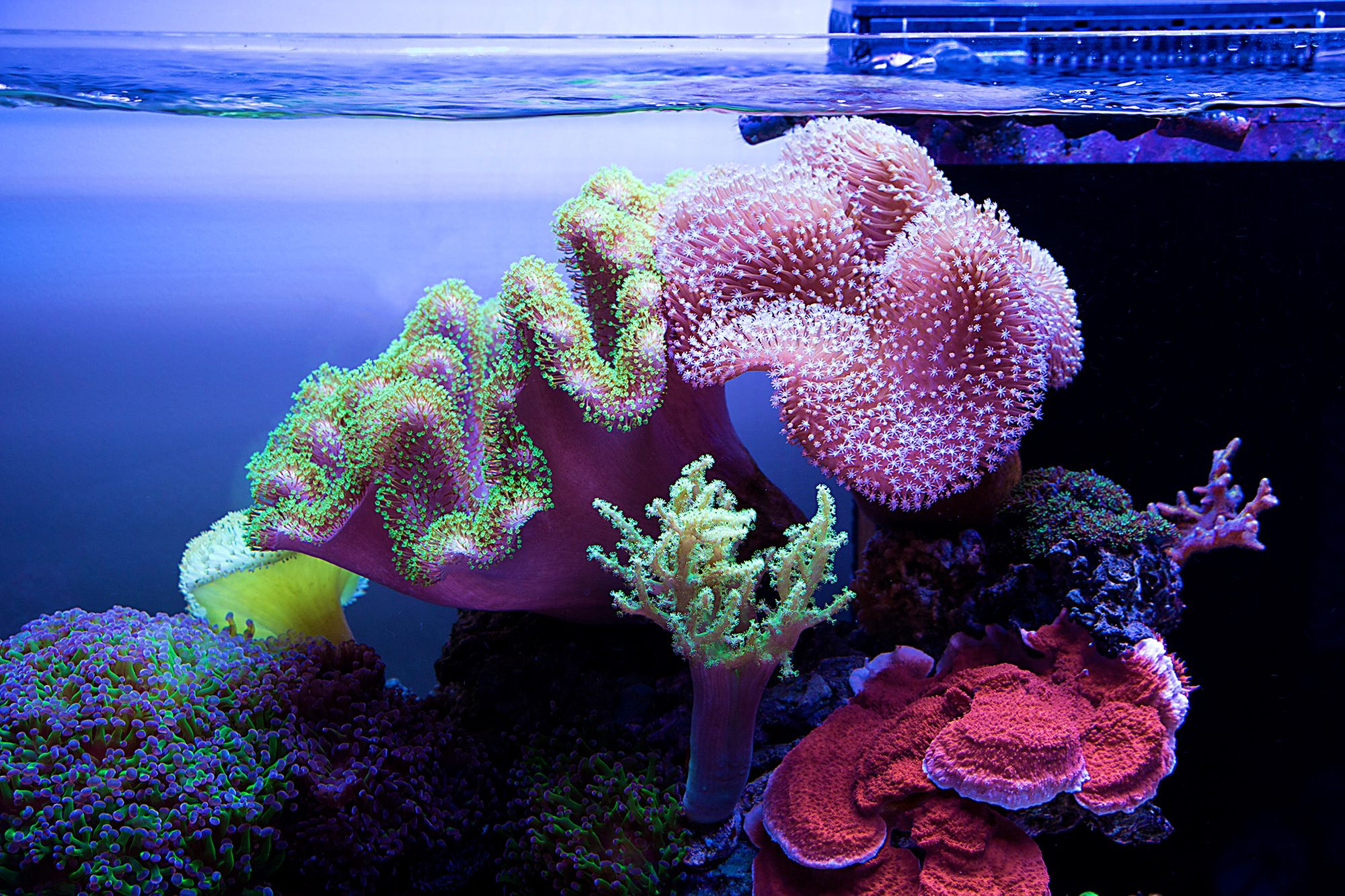 These Are The Best Beginner Corals Photo Broadfield Https Www Reef2reef Com Threads What Saltwater Aquarium Fish Saltwater Aquarium Saltwater Fish Tanks