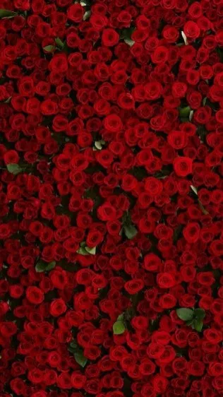 39 romantic roses iphone x wallpapers 00006