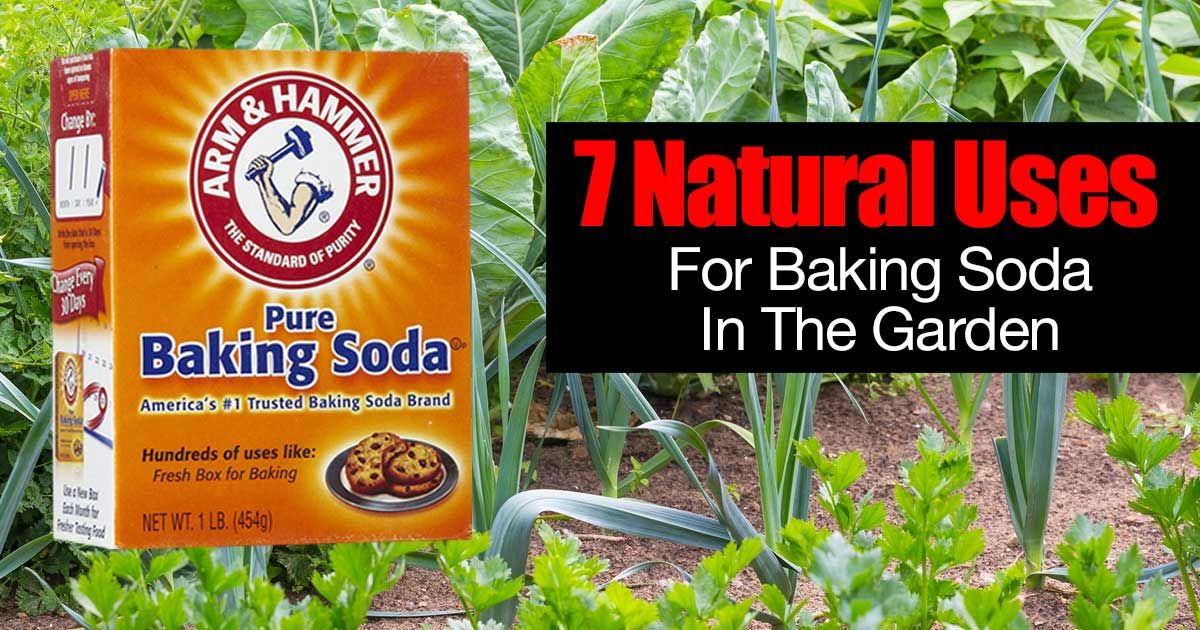 30 Ways To Use Natural Baking Soda In The Garden Yard Care