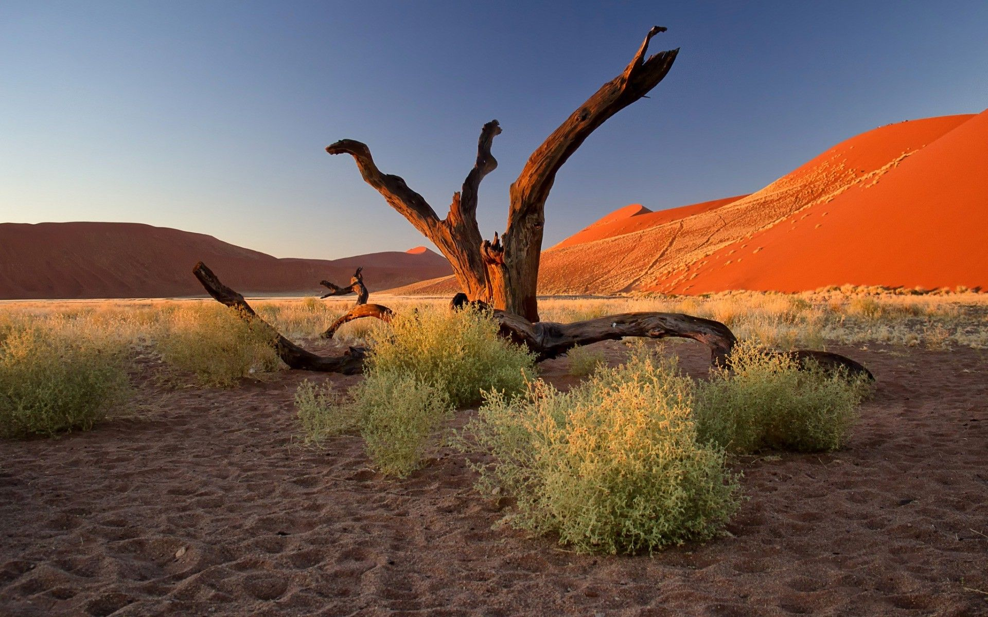 Nature Landscape Trees Dead Trees Plants Namibia Africa Desert Sand Hill Clear Sky Footprints Dune Branch Wallpaper Landscape Trees Clear Sky Dune Hd wallpaper sunset desert trees bushes