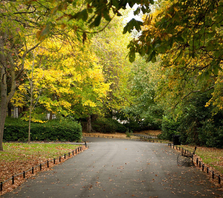 free fall screensavers free 1440X1280 autumn park