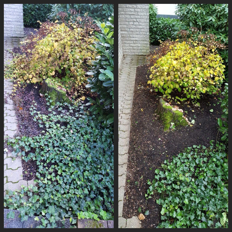 Sogar Efeu Kann Mit Der Richtigen Pflege Unter Kontrolle Wachsen Efeu Gartenbeet Beet Beetpflanzen Zurecht Gri Garten Anlegen Gartenbeet Beetpflanzen