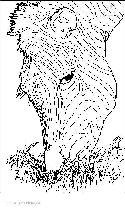 Ausmalbild Zebra Kopf Animal Coloring Pinterest
