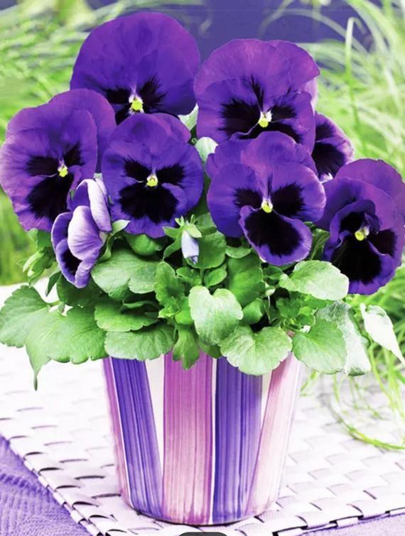 Us Seller 50x40cm Beautiful Purple Pansies Vase Diy Etsy In 2020 Violet Flower Pansies Flowers Pretty Flowers