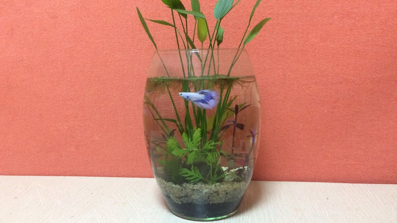 how to change fish tank water in a small tank