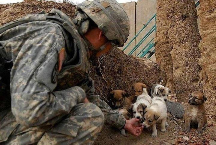 Fantastic Soldier Army Adorable Dog - ddc00c4fd16cf20cfc5d7e96d389d313  Pictures_46767  .jpg