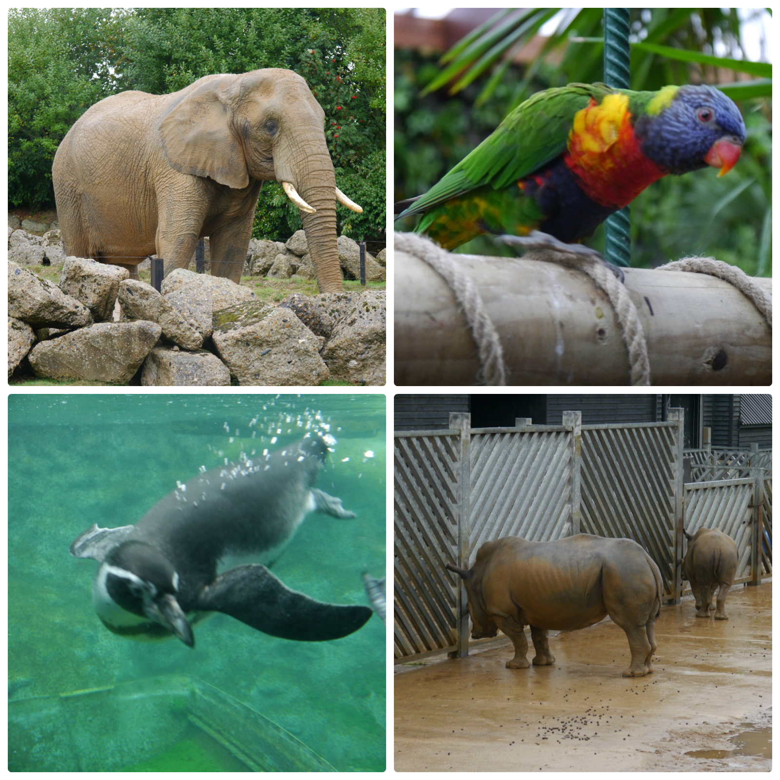 Discussion on this topic: How to Enjoy the Zoo, how-to-enjoy-the-zoo/