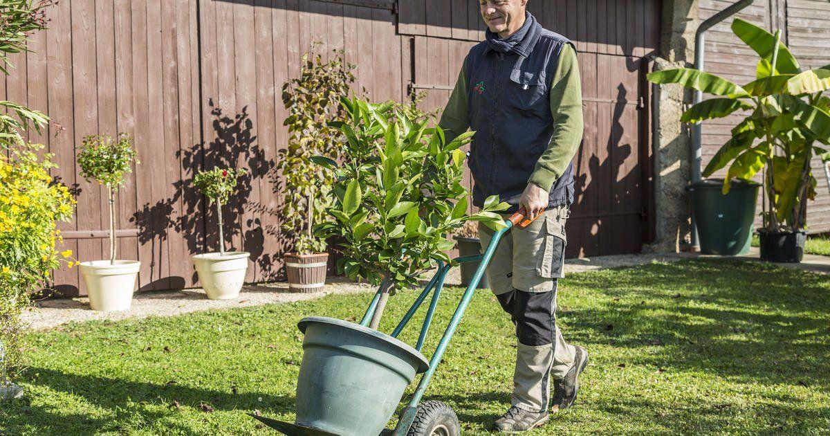 Die Ersten Kubelpflanzen Mussen Rein Kubelpflanzen Pflanzen Tropische Pflanzen