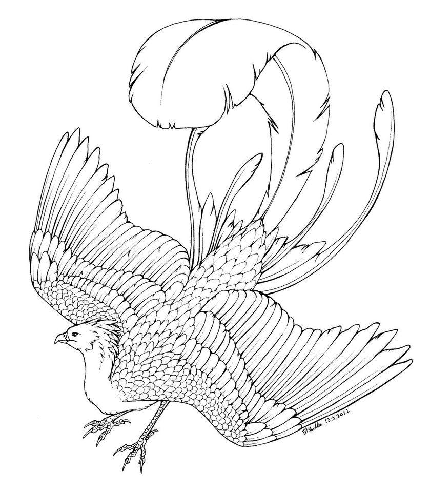 Phoenix Coloring Pages Coloringtop Com Coloring Pages