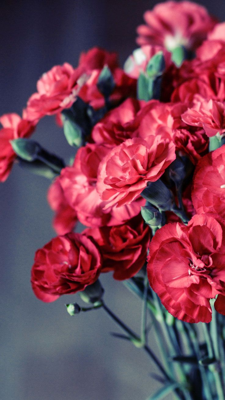 27 Floral Iphone 7 Plus Wallpapers For A Sunny Spring Wallpapers