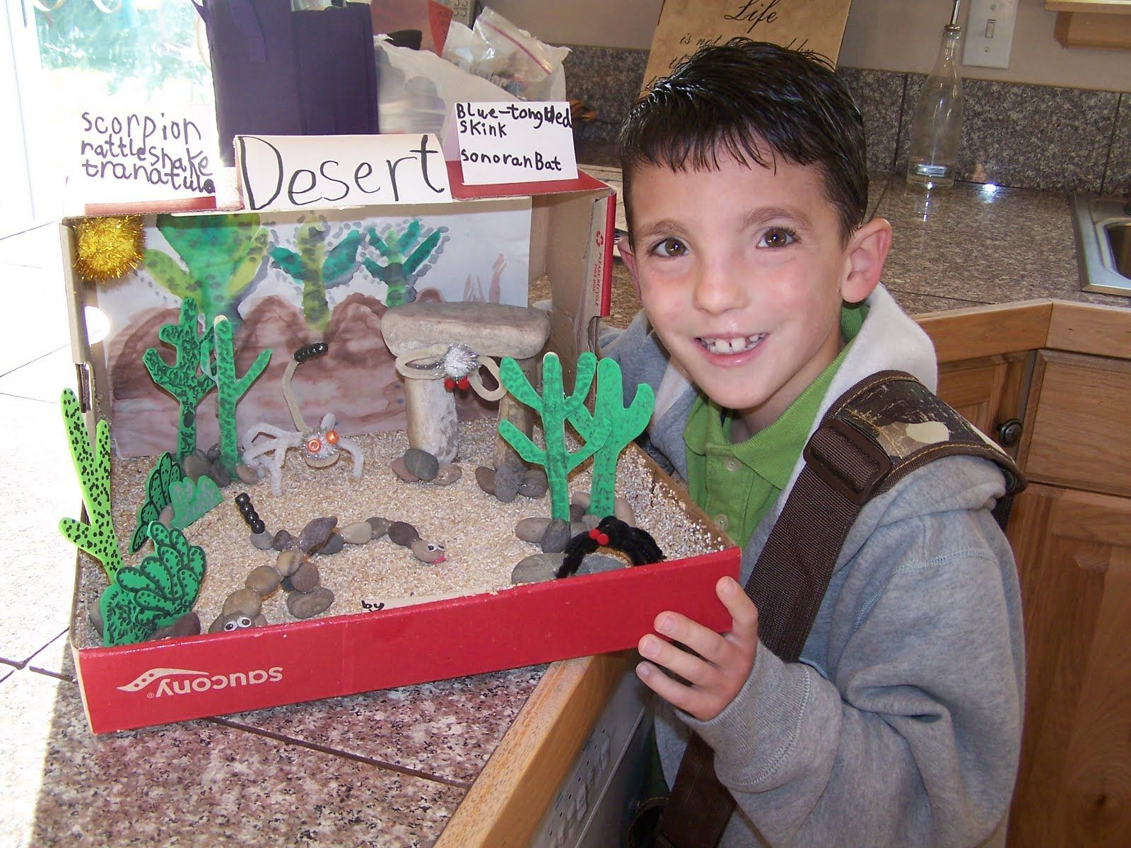 Desert Habitat Dioramadesert Habitat Diorama Shoebox Project Ecosystem