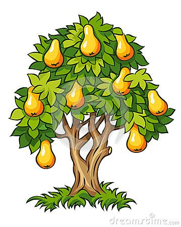 Pear Tree With Ripe Fruits Tree Drawing Family Tree Project Fruit Illustration
