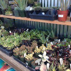 Summer Winds Nursery California